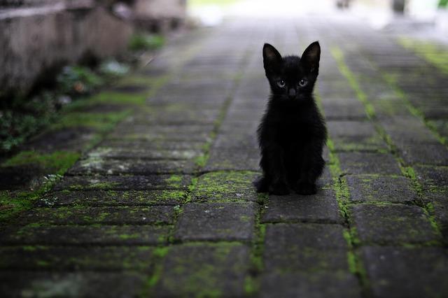 γάτα κορίτσι ραντεβού προφίλ ραντεβού πρακτορείο ραρανό EP 12 ENG sub Dailymotion